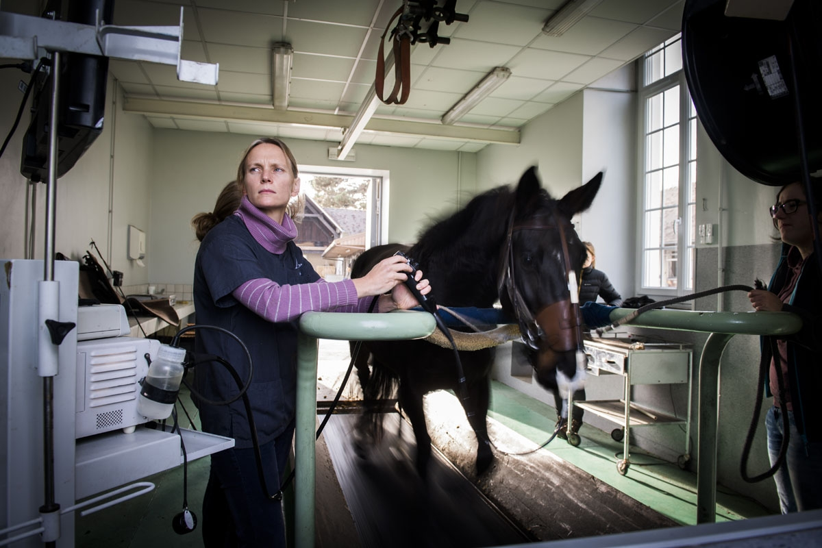 Doctor Amelie Vitte is practicing a dynamic respiratory scope on a horse at the veterinary clinic of the equestrian training center of Grosbois in Marolles-en-Brie, on November 23,