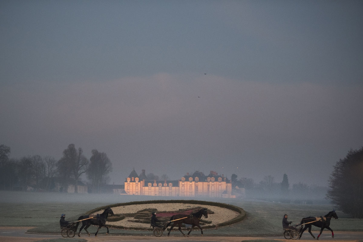 Horses walk past the castle of Grobois at the equestrian training center of Grosbois in Marolles-en-Brie, on December 6, 2016