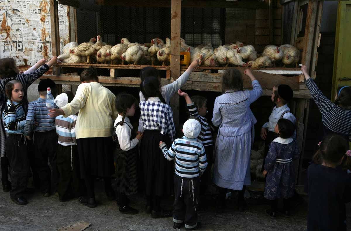 Ultra-Orthodox Jewish children looks at the chickens during the Kaparot ceremony in Mea Shearim (one hundred gates) neighborhood of Jerusalem, 17 September 2007.