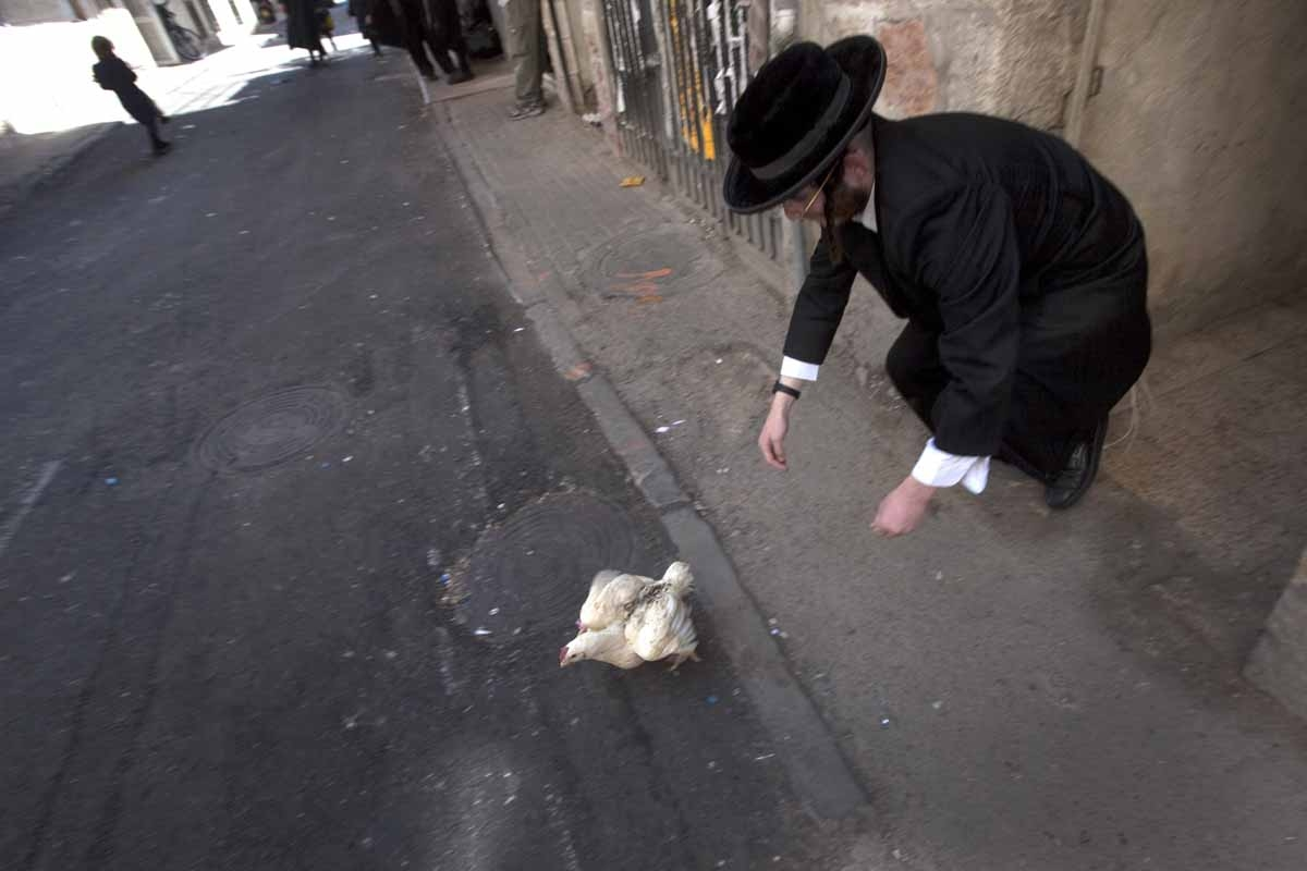 An Ultra-orthodox Jewish man tries to catch a chicken during the Kaparot ceremony in Mea Shearim Ultra Orthodox neighborhood of Jerusalem on September 23, 2009.