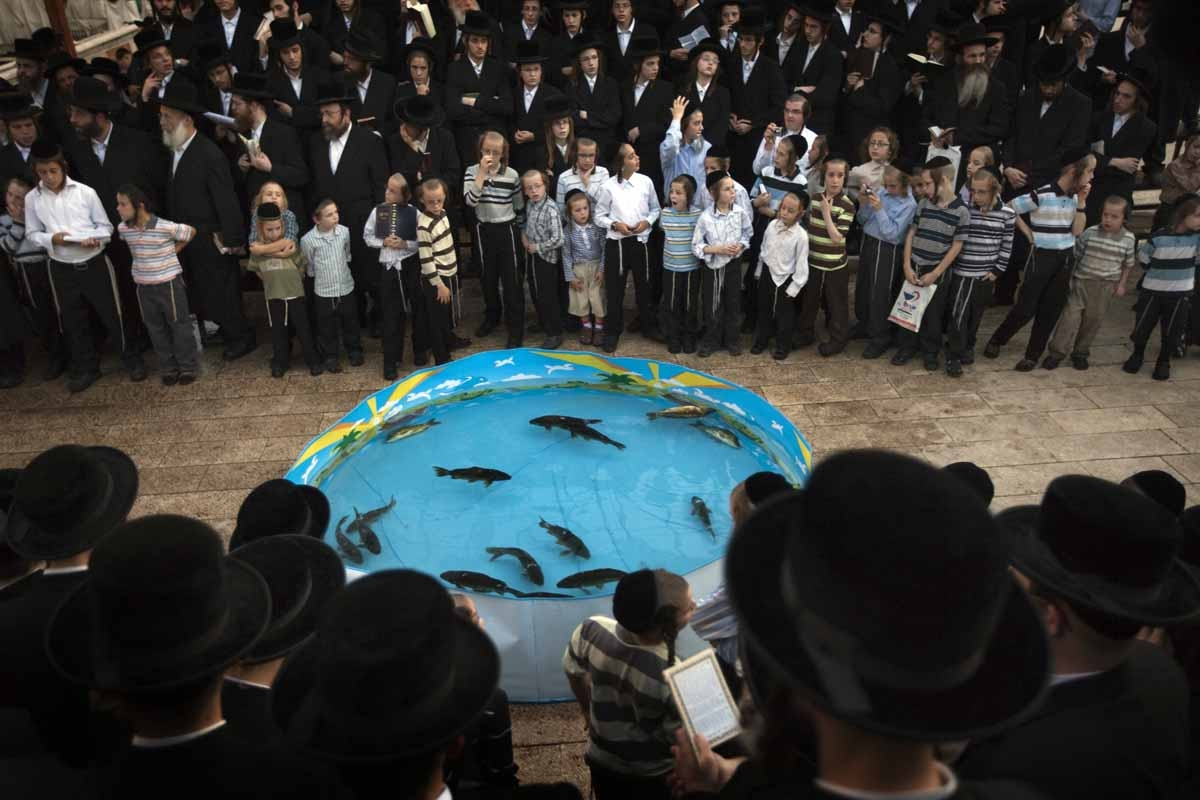 Ultra-Orthodox Jews pray in front of a plastic pool filled with water and live fish in the ultra-Orthodox Israeli city of Bnei Brak, near Tel Aviv, on September 16, 2010, as they perform the 'Tashlich' ritual during which they cast their sins into the wat