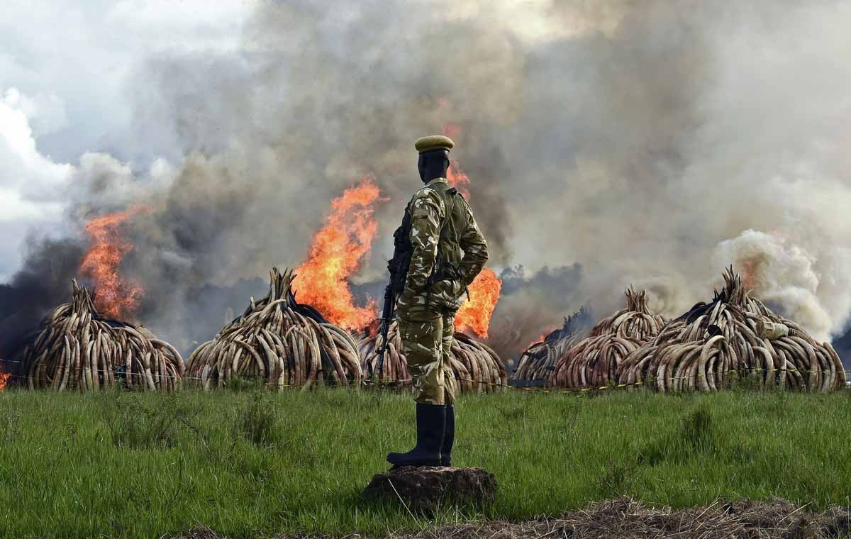 Kenya Wildlife Services (KWS) rangers stand guard around illegal stockpiles of burning elephant tusks, ivory figurines and rhinoceros horns at the Nairobi National Park on April 30, 2016.