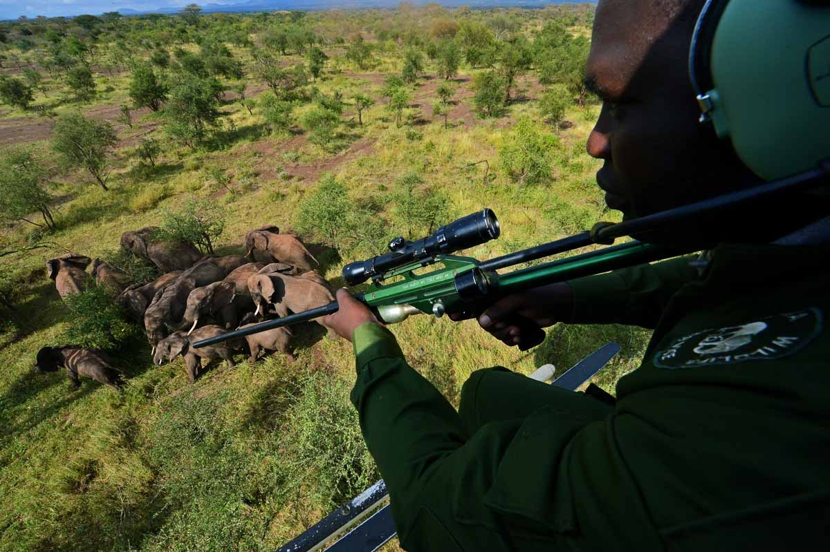 A Kenya Wildlife Services (KWS) vet holds a tranquiliser gun as he views wild elephants from a helicopter in Amboseli national park, Kenya on March 14, 2013.