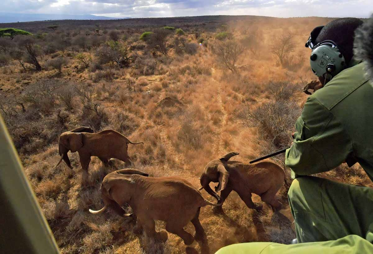 A veterinarian shoots an elephant with a tranquilizer gun from a helicopter outside Amboseli National Park on November 2, 2016.