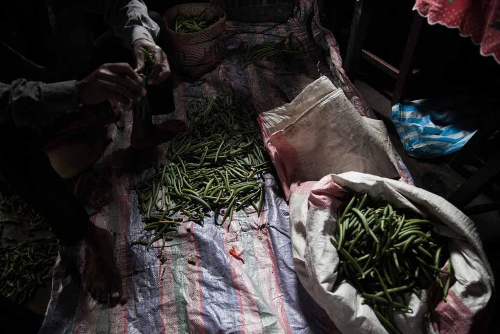 Vanilla producer 43-year old Patrick Razafiarivo separates green vanilla beans on May 26, 2016 in the municipality of Ambomalaza, Sambava, Madagascar.