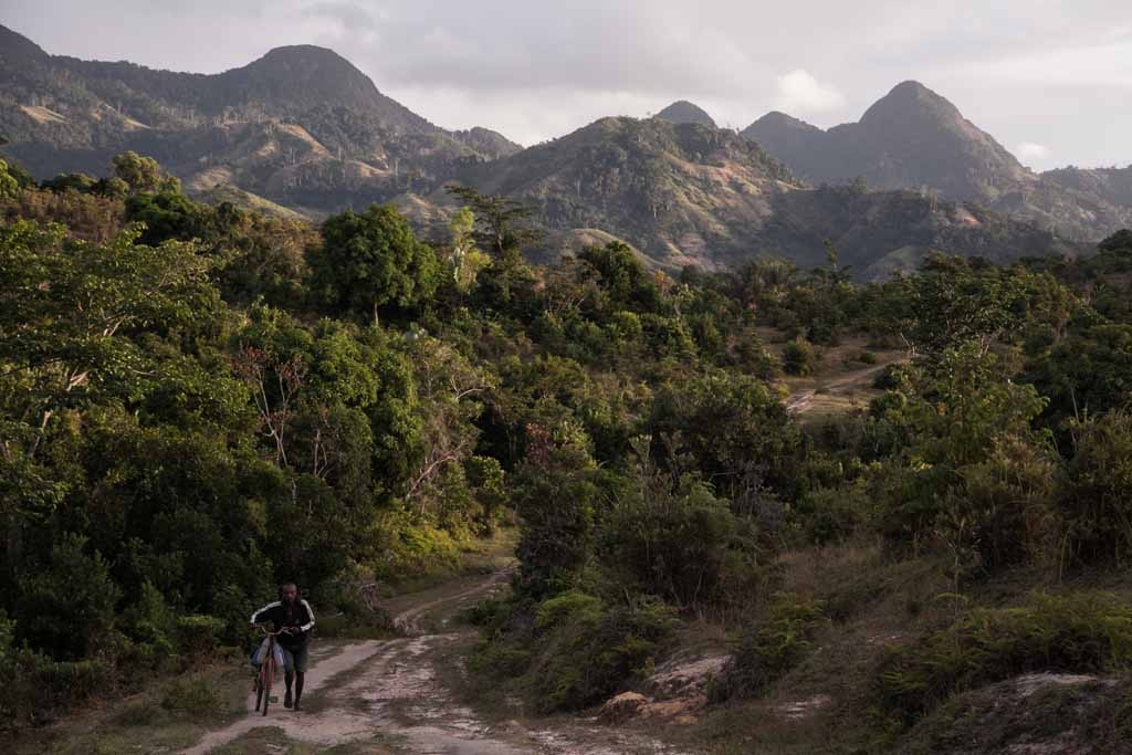A man pushes a bicycle close to a vanilla plantation forest on May 25, 2016 in the municipality of Bemalamatra, 30 kms from Sambava, Madagascar.