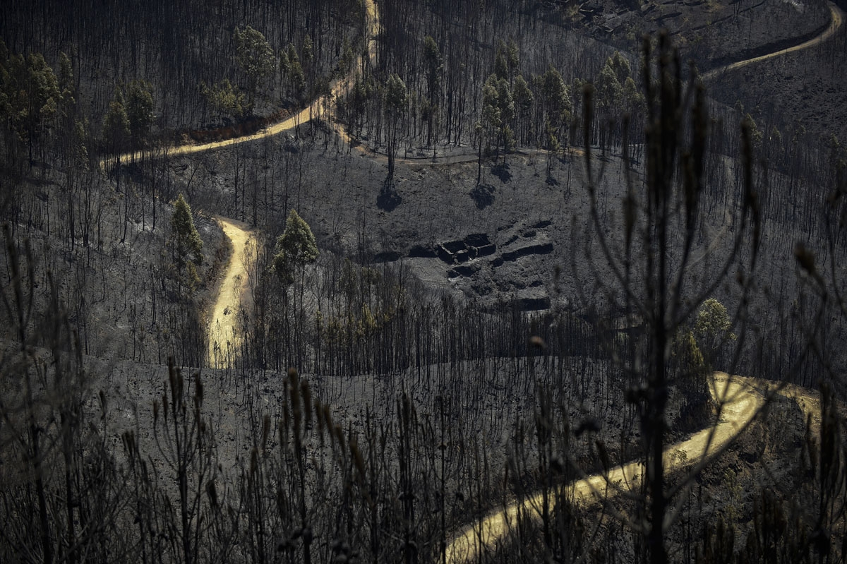 A road meanders among burnt forest areas affected by a wildfire in Vale do Cambra, some 30 km to Pedrograo Grande, on June 20, 2017.