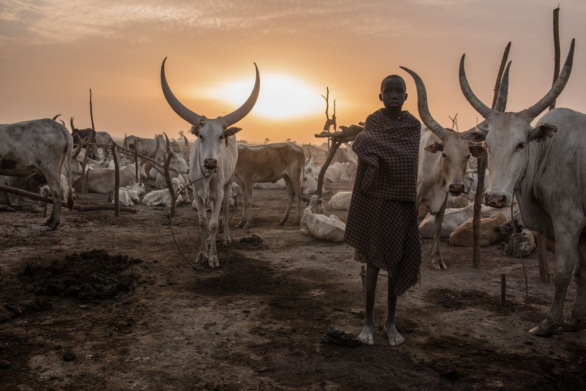 A Sudanese boy from Dinka tribe poses between cows in the early morning at their cattle camp in Mingkaman, Lakes State, South Sudan on March 4, 2018.