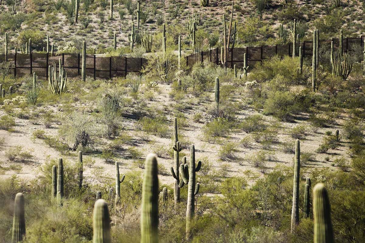 The border fence is surrounded by cacti at Organ Pipe Cactus National Monument near Lukeville, Arizona, on February 16, 2017, on the US/Mexico border.
