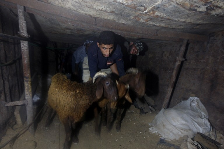 Smuggling sheep from Egypt into Gaza through a tunnel under the border in November 2010