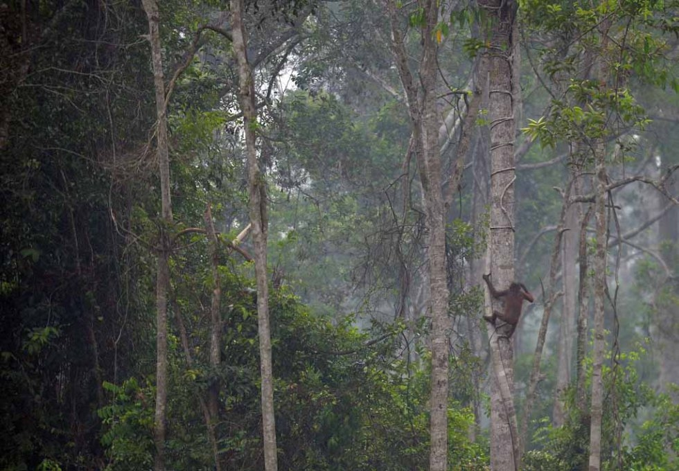 Haze seeps through the trees at a rehabilitation centre for orangutans on the outskirts of Palangkaraya.