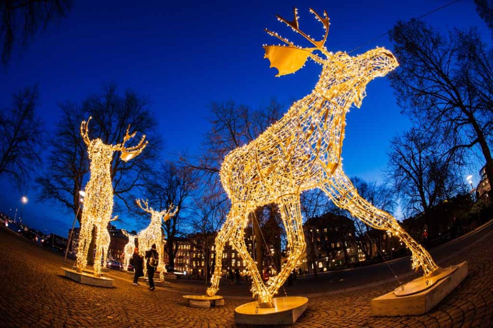 Electric moose light up Stockholm.