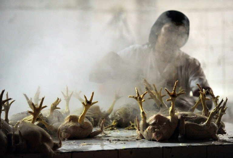 A woman at a central market cleans chicken to deliver before the opening of Lima food markets and restaurants on July 18, 2010