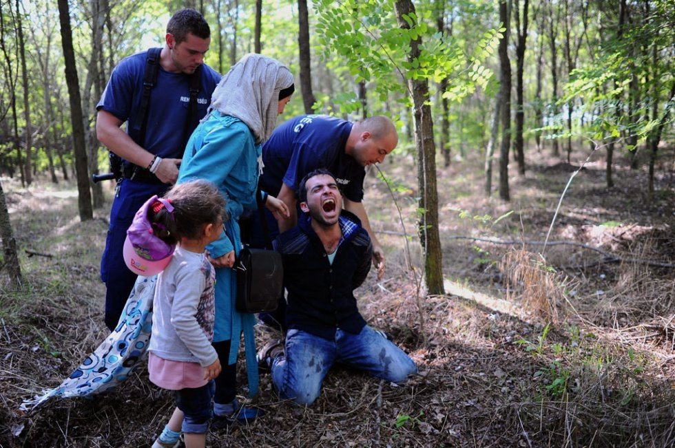 A refugee is arrested by the Hungarian police in front of his wife and daughter near the village of Roszke after crossing the Serbian border on August 28, 2015