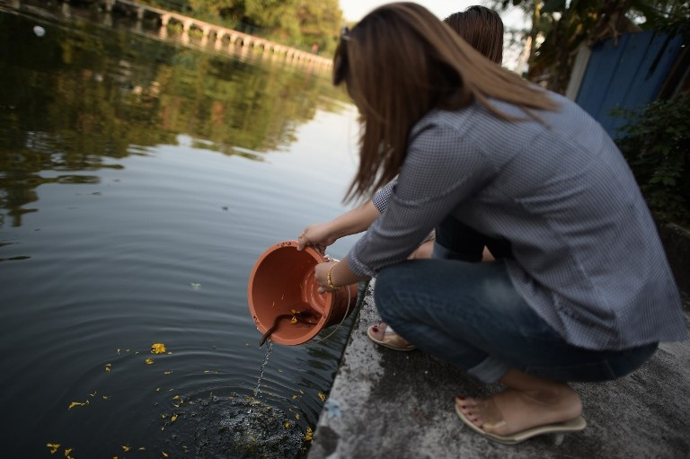 Releasing fish into a canal to earn 'merit' at a Bangkok shrine to 'Nak' on January 15, 2015