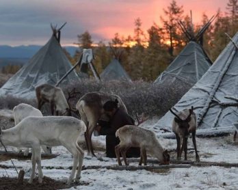 Ganbat Punsul milking reindeer at dawn. (AFP/Greg Baker personal collection)